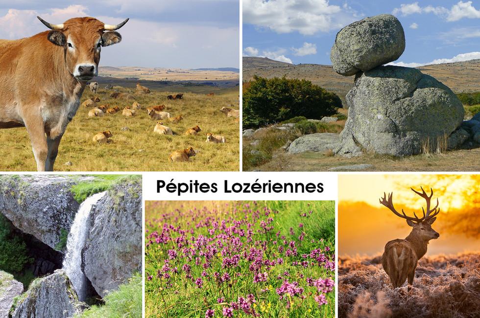 8_-_Pépites_Lozériennes_compo_5_vues