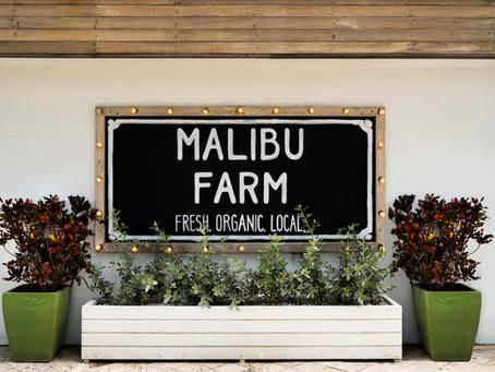 Spice & Charm @ Malibu Farm