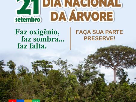 21 de setembro: Dia Nacional da Árvore