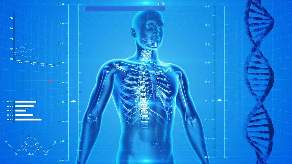 CBD e corpo umano