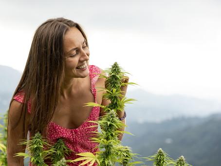 Lavorare nella cannabis, pro e contro