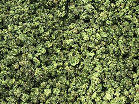 Perche' vendere prodotti alla cannabis nelle erboristerie e parafarmacie?