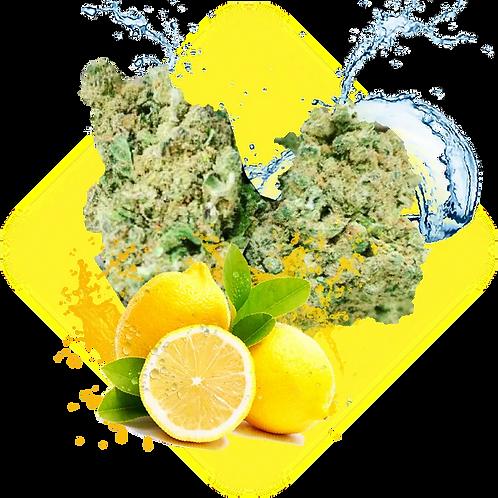 Super Lemon Haze Indoor 0,2% THC