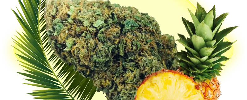 Pineapple Express Indoor 0,2% THC