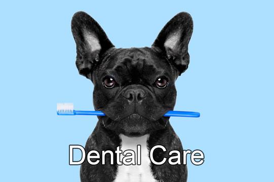 dental care icon.jpg