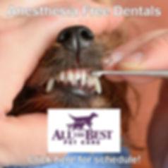 anesthesia free dentals icon.jpg