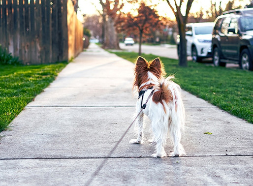 How to have an awesome sniffing walk for your dog!