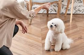 a woman asking her fluffy dog to sit.