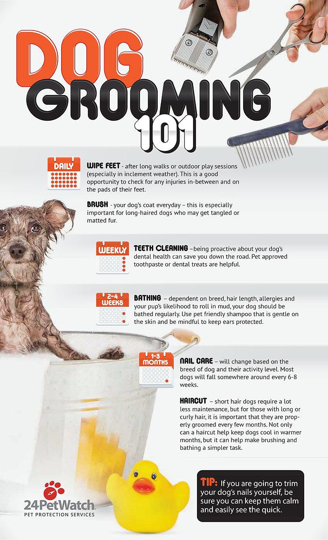 dog-grooming-101.jpg