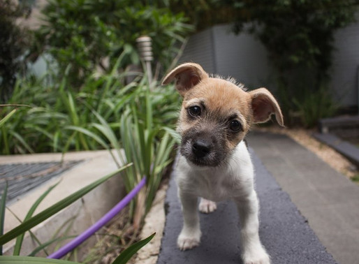 11 tips for bringing home a new pet