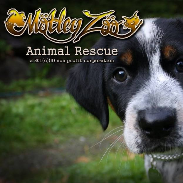 Motley Zoo Animal Rescue | Non-profit | Redmond WA