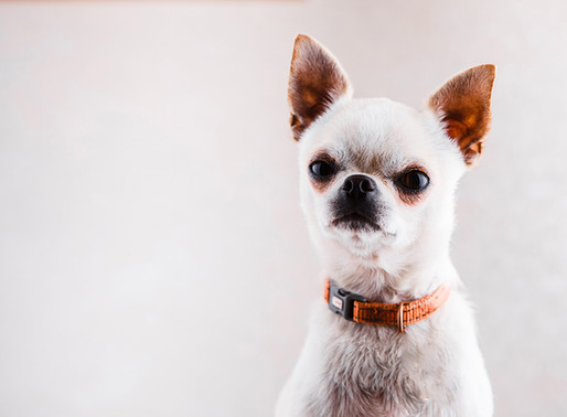 IS THAT DOG YOU WANT TO ADOPT AGGRESSIVE OR JUST FEARFUL? HOW TO TELL THE DIFFERENCE.