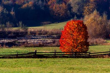 Foto_Landscape_66