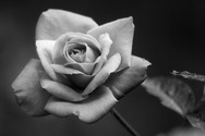 Flori_07