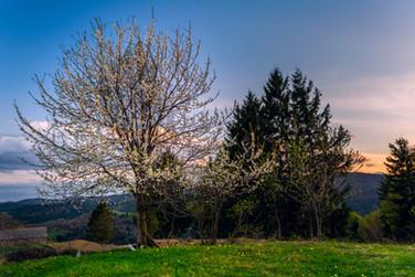Foto_Landscape_48