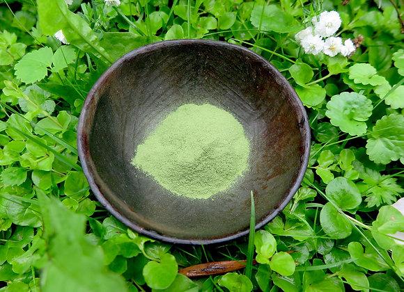 Moringa pulver - superfood som kosttilskud