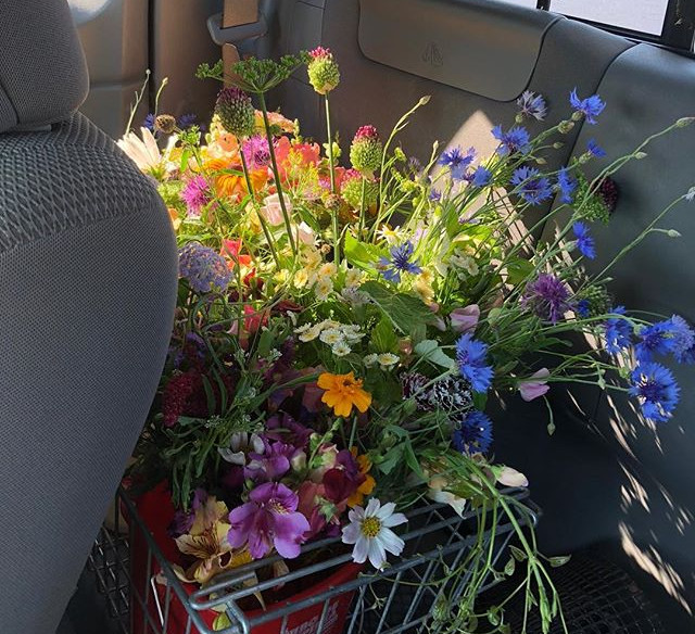 Early summer free flower delivery