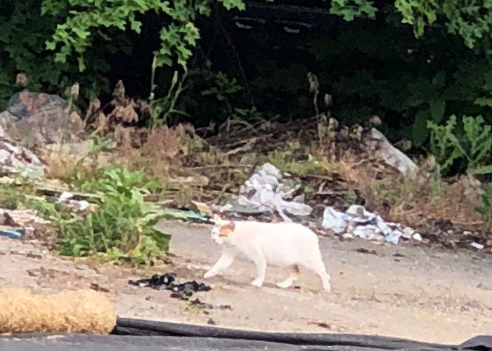 Feral cats protect our fields from mice and voles