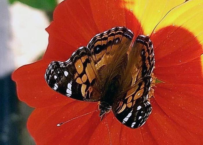 Pollinators love our organic farm
