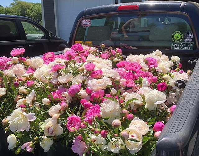 Gleaning event: The Farm picks leftover flowers in local flowers fields for charity