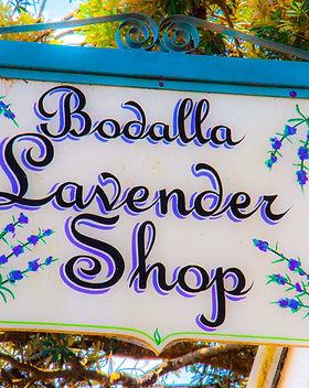 Bodalla Lavender.jpg