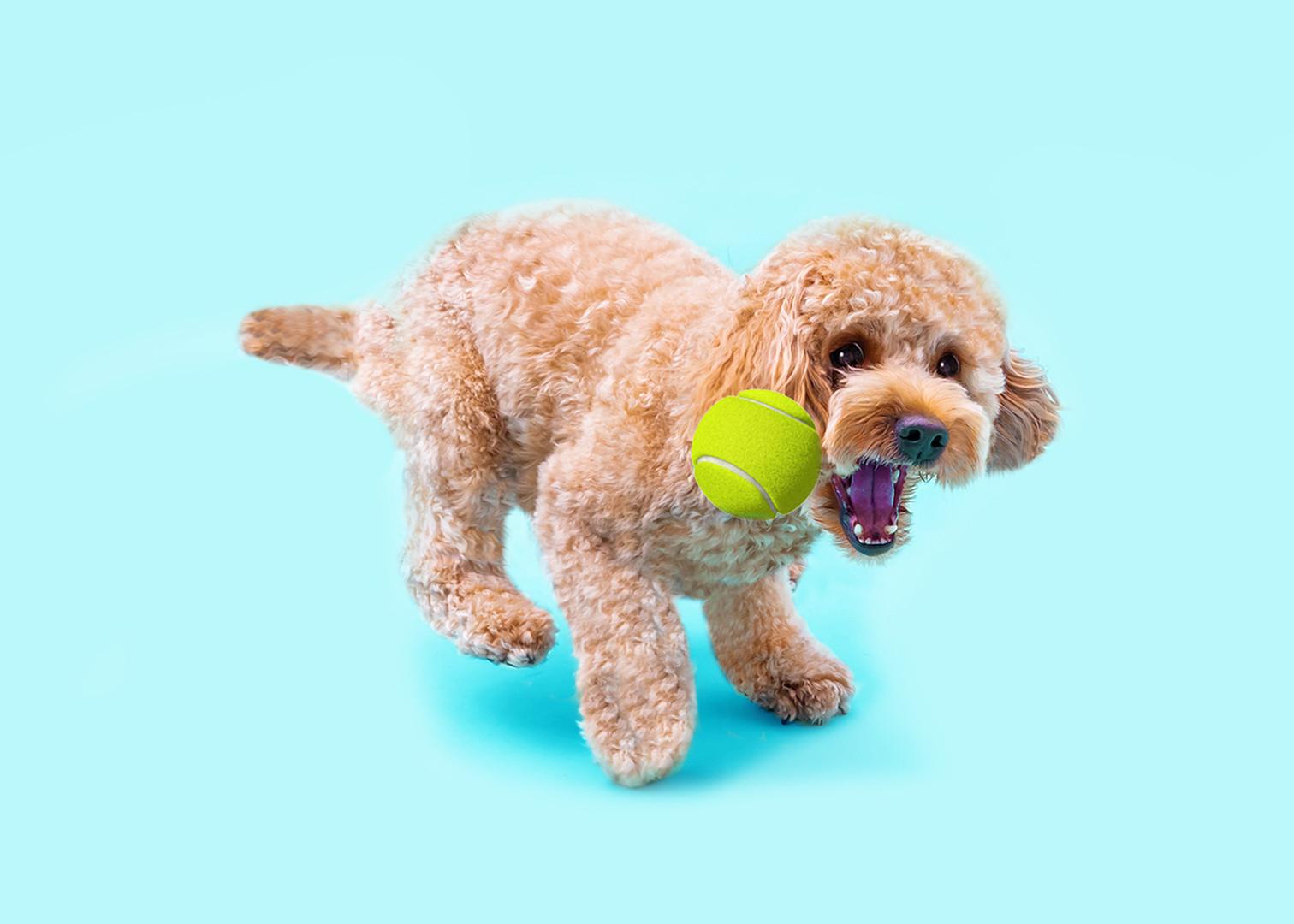 dog with ball.jpg