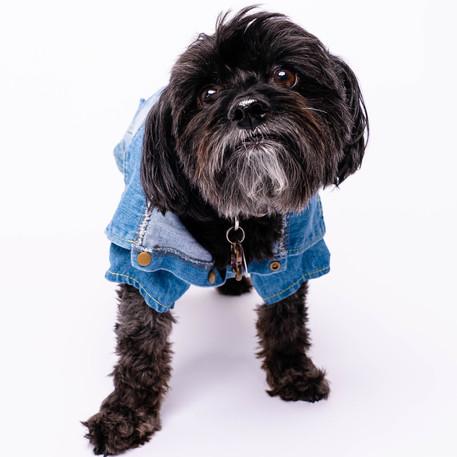 Dog Blue Jacket.jpg