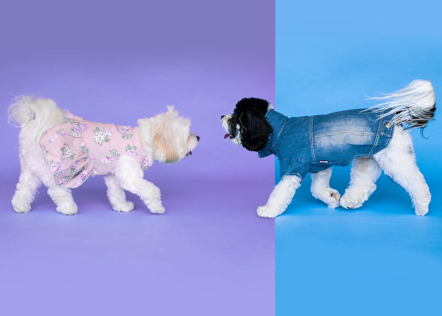two pups.jpg