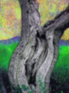 olivier en vert  .jpg