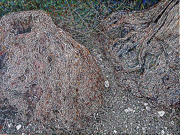 Souches d'olivier.1jpg.jpg