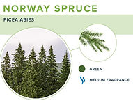 types-of-christmas-trees-norway-spruce.j