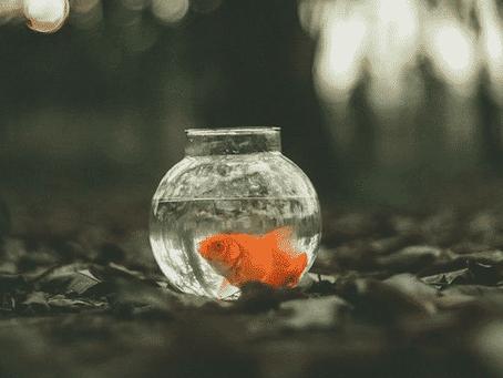 Garder un poisson rouge dans un bocal est un acte cruel