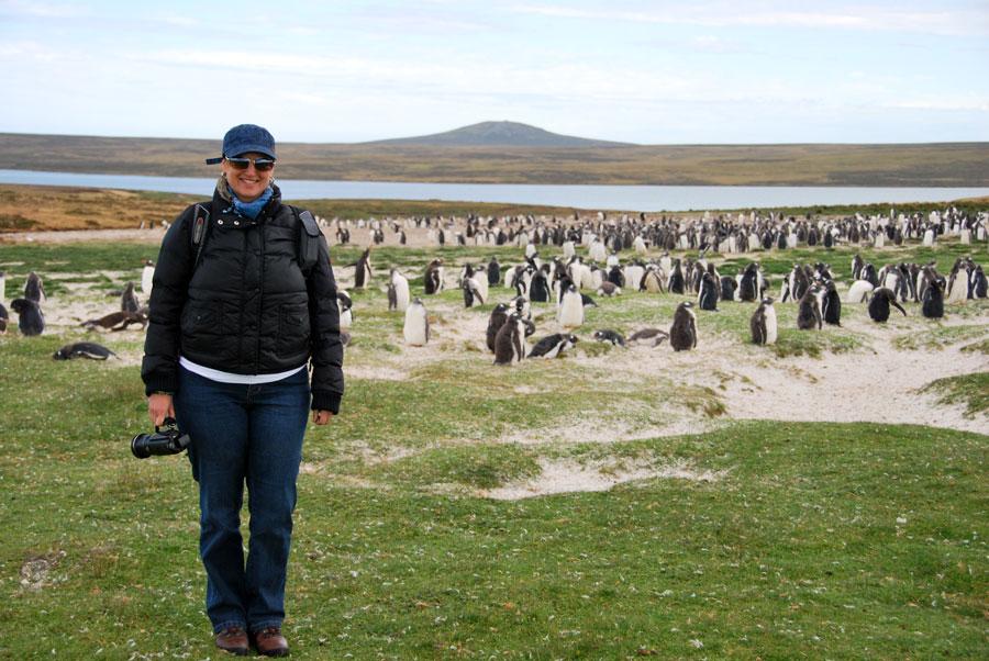 Monika Gentoo Penguin FalklandIsland