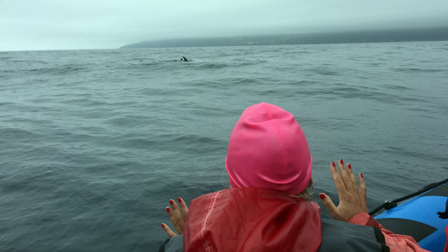 Dolphin encounter, Pico
