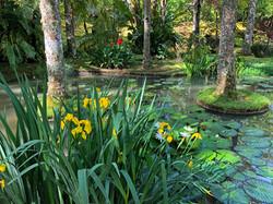 Terra Nostra Botanical Garden