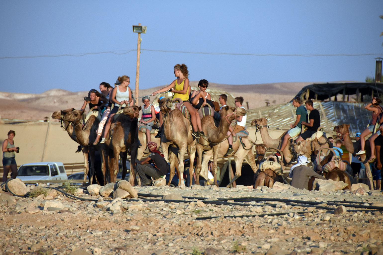 Camels at Kfar Hanokdim
