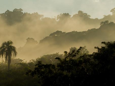 Misiones busca preservar la biodiversidad