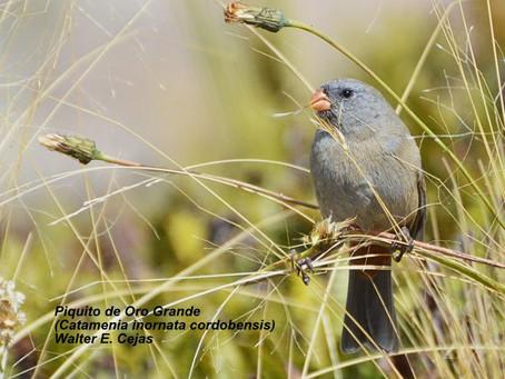 Avistaje de aves y trekking en capilla del monte