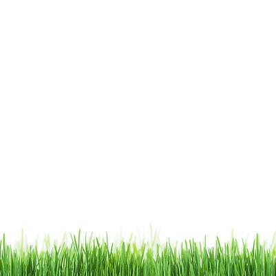grasslaaning.jpg