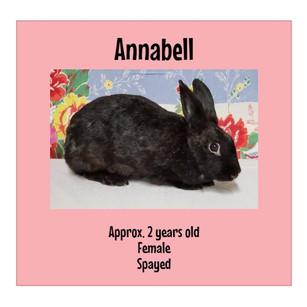 ANNABELL.jpg
