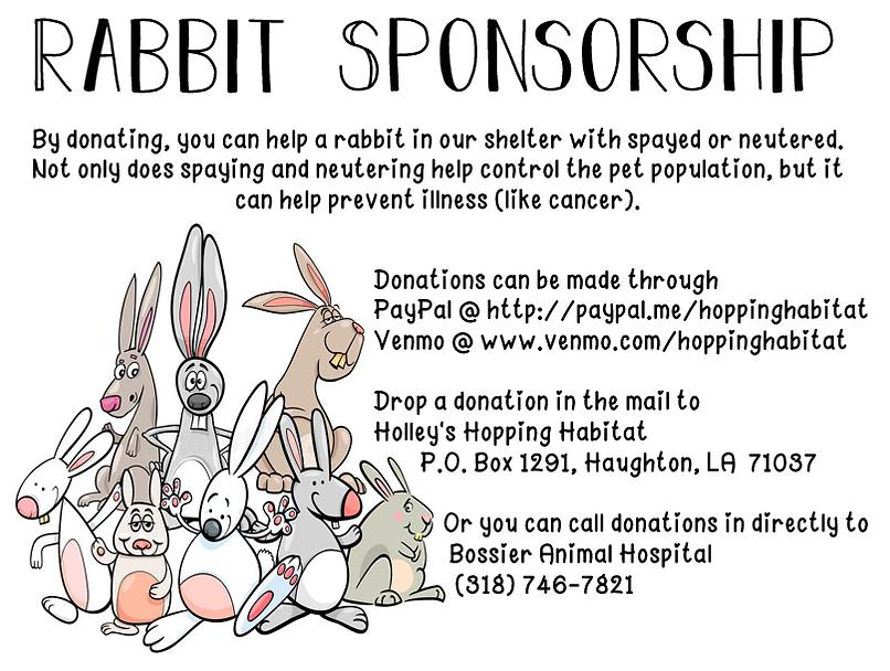 rabbit sponships flyer.png