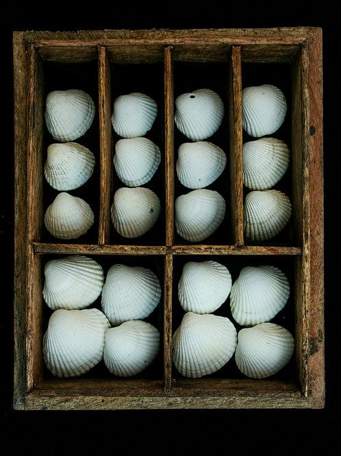 7. Coquillages