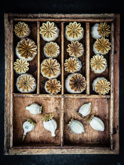 4. Papaver Collect
