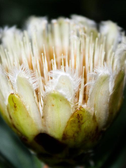 22. Lotus Bloom