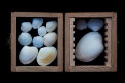 6. Coquilles de Palourdes