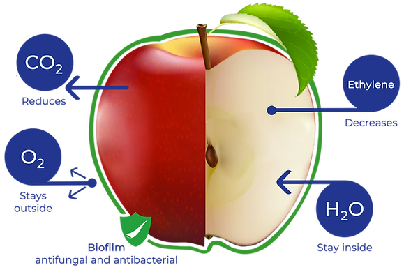 Manzana complete.png