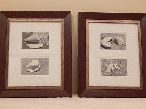 Framed Seashell Photographs