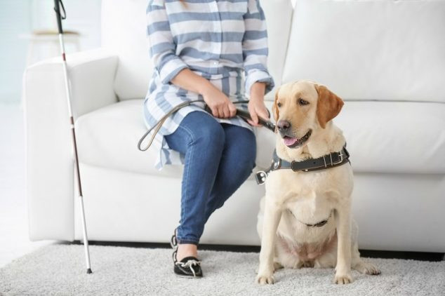 The Ultimate Guide to Optimizing Your Home for a Service Dog