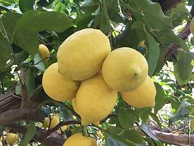 limoni.jpg