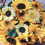 Sunflowers - Go Bananas Mix